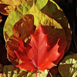 The Heart of Autumn by Garth Glazier