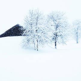 The heavy Snowfall by Imi Koetz