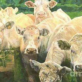 The Herd by Melanie Roan