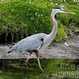 The Heron Strut by Norma Brandsberg