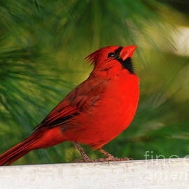 The Hopeful Cardinal by Kerri Farley