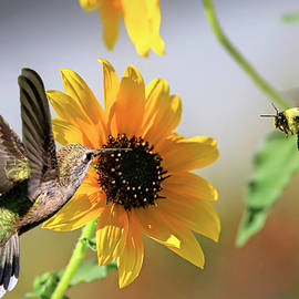 The Hummer and the Bumble by Donna Kennedy
