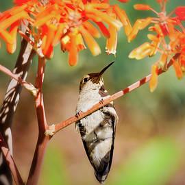 The Hummingbird On Watch  by Saija Lehtonen