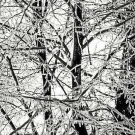 The Ice Queen's Garden by Susan Maxwell Schmidt