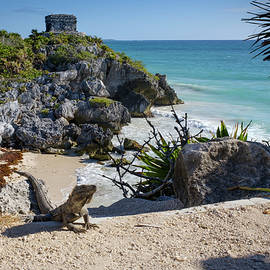 The Iguana at Tulum Mayan Ruins by Mary Lee Dereske