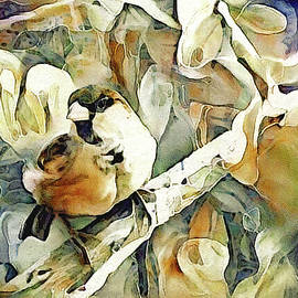 The Inquisitive Sparrow by Susan Maxwell Schmidt