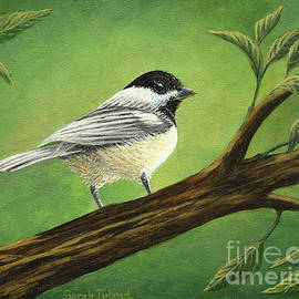 The Intrepid Chickadee by Sarah Irland