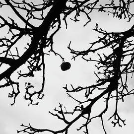 The last apple on the tree by Martin Vorel Minimalist Photography