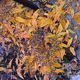The Last Blaze of Autumn by Nancy Kane Chapman