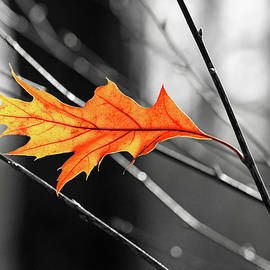 The last leaf by Carolyn Derstine