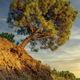 The Leaning Pine Tree by Kevin Airey