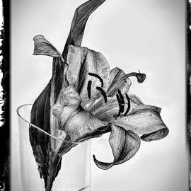 The lily returns 002 by Mike Penney