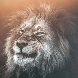 The Lion Grind by Melanie Delamare