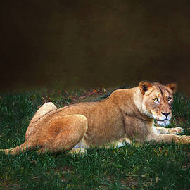 The Lioness by Amy Jackson