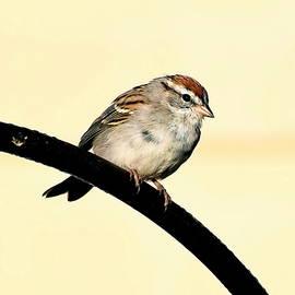 The Little Bird by Rick Davis