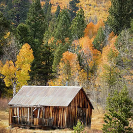 The Little Cabin In The Woods by Mitch Shindelbower