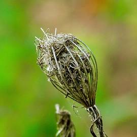 The Little Things in Nature - 20 by Arlane Crump