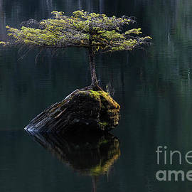 The Little Tree On Fairy Lake 11 by Bob Christopher