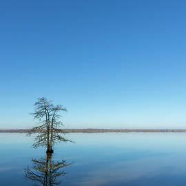 Lone Cypress by Jurgen Lorenzen