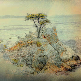 The Lone Cypress by Reese Lewis