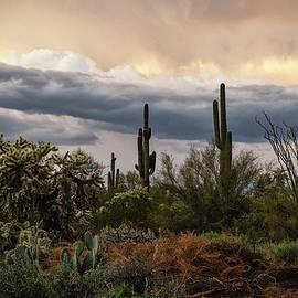 The Many Layers Of The Sonoran by Saija Lehtonen