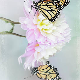 The Monarch Butterfly and Flower by Linda D Lester