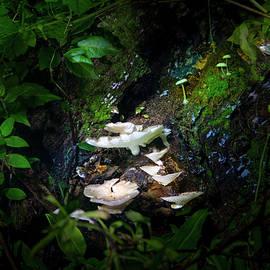 The Mushroom Grotto by Mark Andrew Thomas