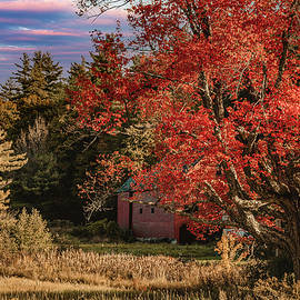 The Old Red Maple at the edge of the field by Jeff Folger