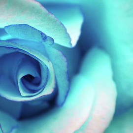 The one with the Blue Rose