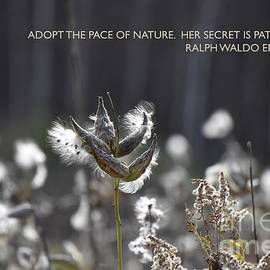The Pace of Nature