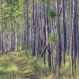 The Path Less Taken - Croatan National Forest by Bob Decker