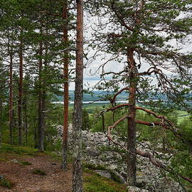 The pines at the top of Aavasaksa 1 by Jouko Lehto