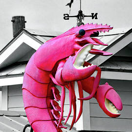 The Pink Shrimp of Shem Creek by Jerry Griffin