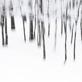 The Poetry Of A Snowstorm by Alan Brown