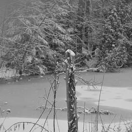 The Post and The Pond in Black and White by Chris Bartley
