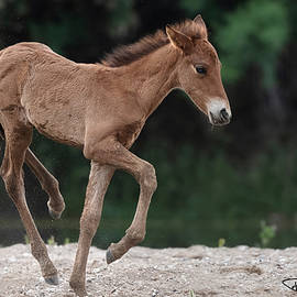 The Prancing Foal. by Paul Martin