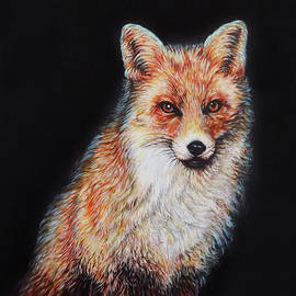 The Red Fox Portrait by Asp Arts