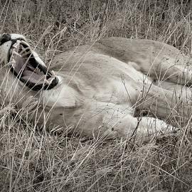 The Roar by Lewardeen