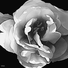 The ROSE - B-  W  by VIVA Anderson