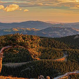 The Sentinel Of Mt. Evans by Angelo Marcialis