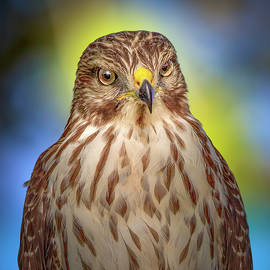 The Serious Hawk by Mark Andrew Thomas