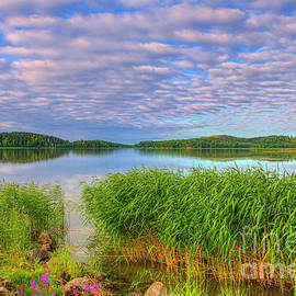 The silence of the summer morning by Veikko Suikkanen