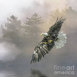 The Silent Swoop by Brian Tarr