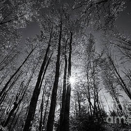 The Sparkling Forest Light Mono by Rachel Cohen