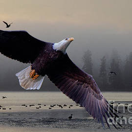 The Splendor Of Bald Eagles by Bob Christopher