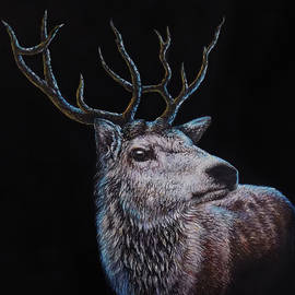 The Stag Acrylic Portrait by Asp Arts
