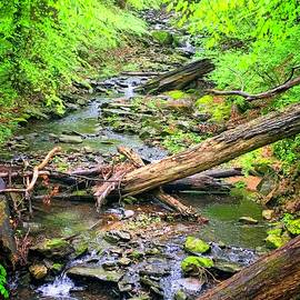 The Stream in Spring by Doug Swanson