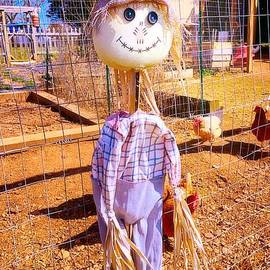 The Sunshine Kid by Debra Lynch