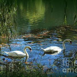 The Swan Lake in Early Autumn by Dora Sofia Caputo