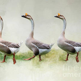 The Three Graces by Eva Lechner